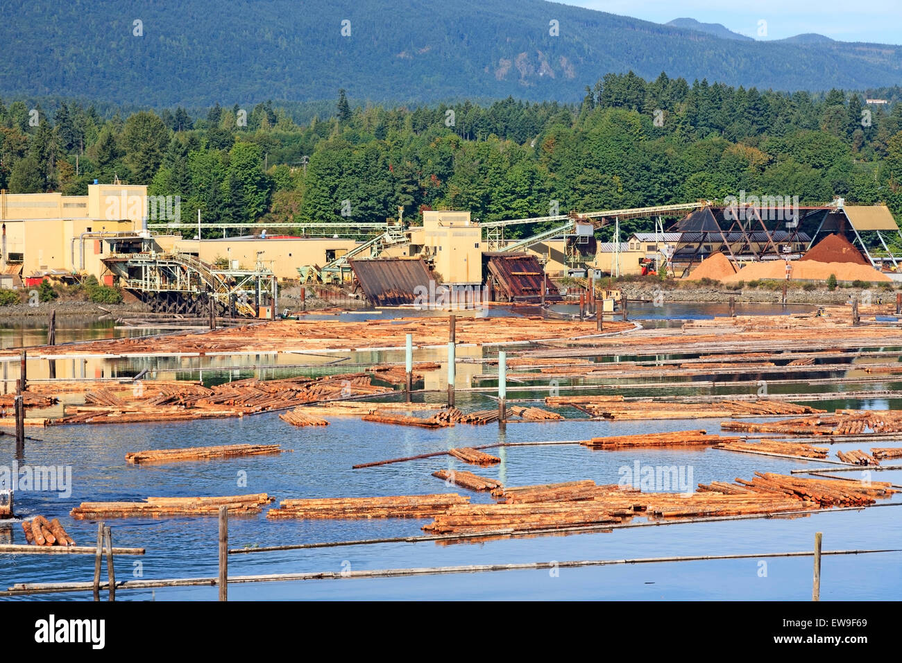 Western Forest products cedar sawmill, Chemainus, Vancouver Island, British Columbia - Stock Image