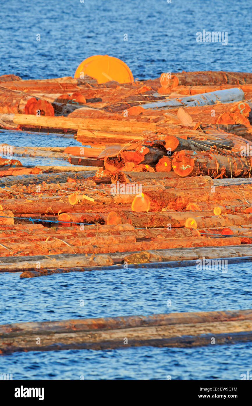 Log booms at Duke Point area, near Nanaimo, Vancouver Island, British Columbia - Stock Image