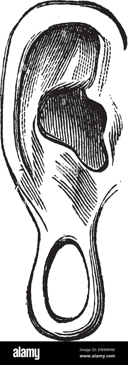 Old engraved illustration of ear of Manco Capac isolated on a white background. Industrial encyclopedia E.-O. Lami - Stock Image