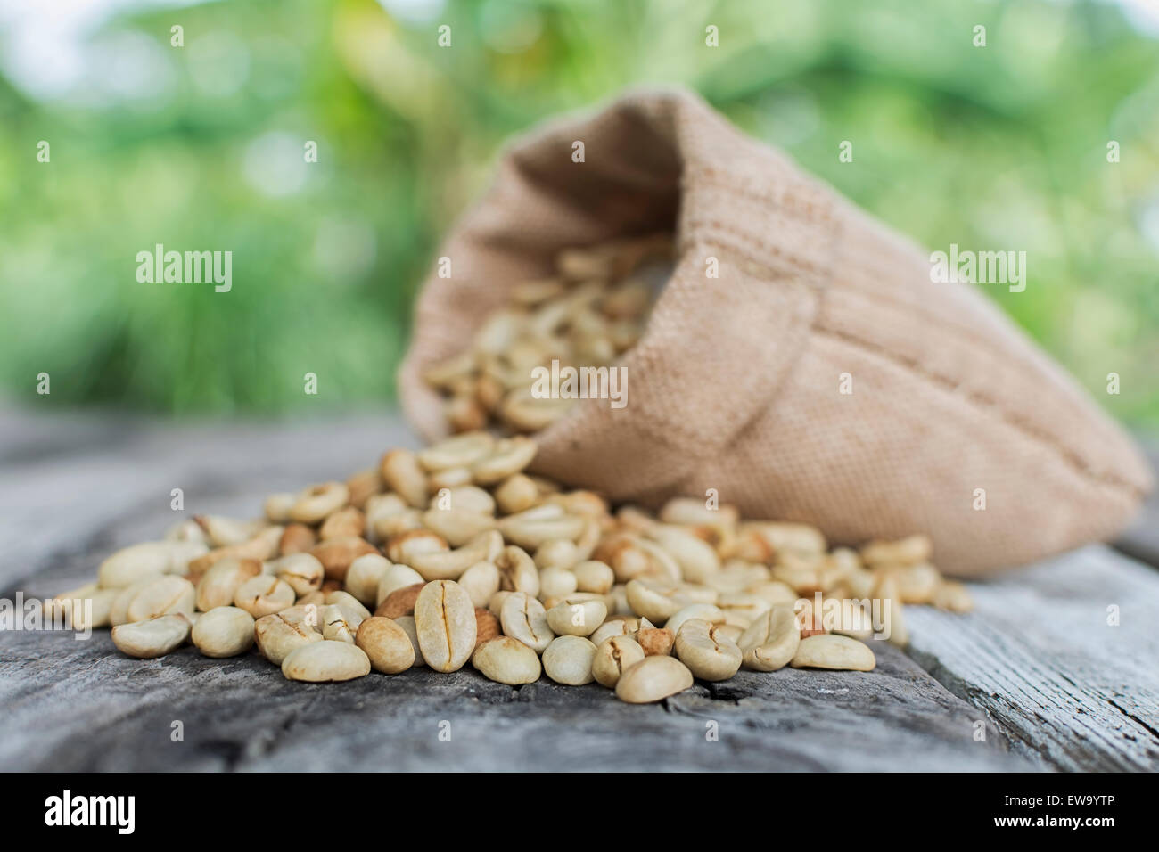 Raw coffee beans on green blurred background. Focus coffee beans front - Stock Image