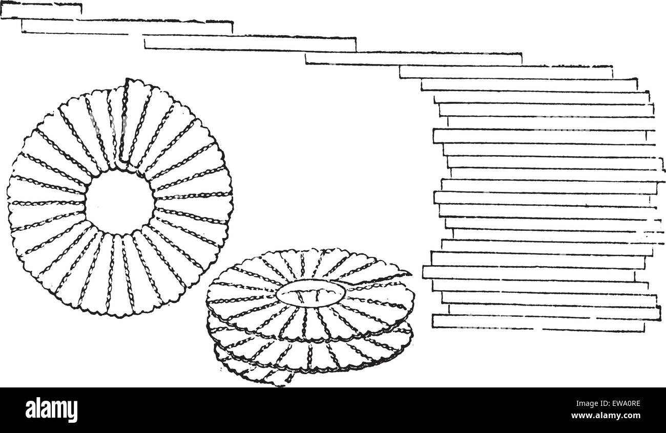 Diatoms - Bacillaria paxillifer (right) and  Meridion vernale (left and center), magnified, vintage engraved illustration. Stock Vector