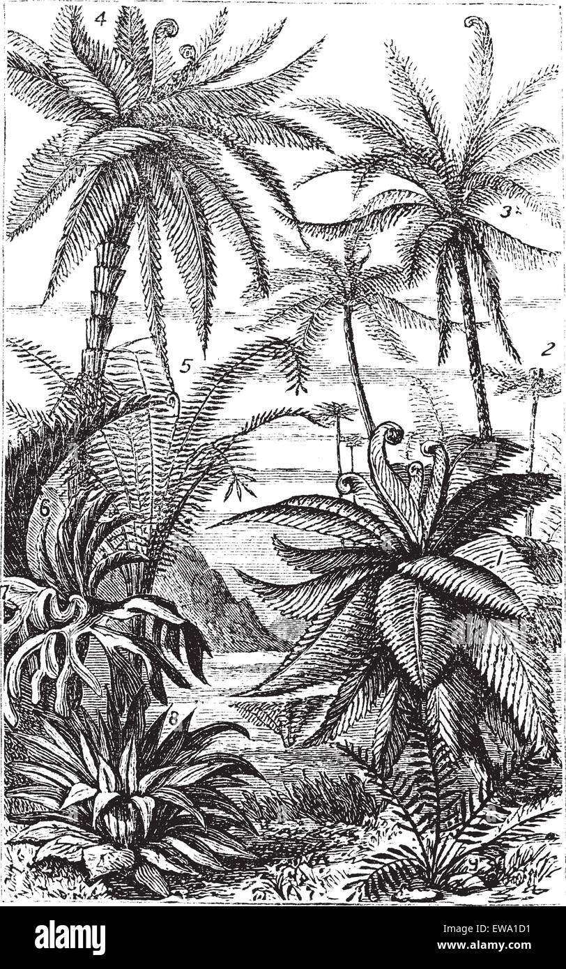 Arborescent Ferns during the Carboniferous Period, vintage engraved illustration. Trousset encyclopedia (1886 - Stock Vector