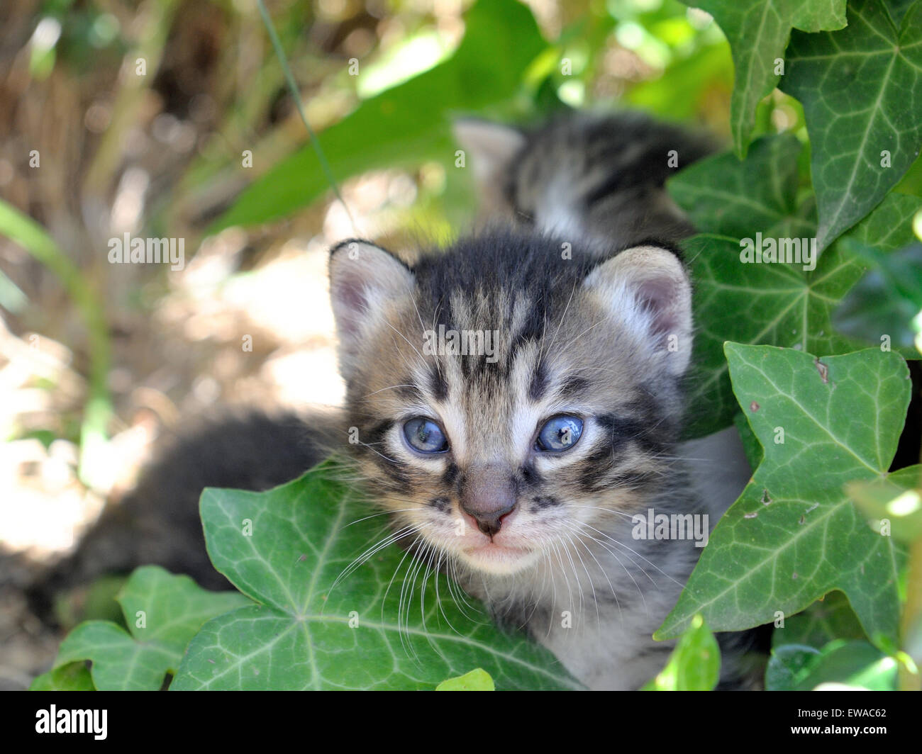 Kittens newborn photographed among the grass in daylight - Stock Image