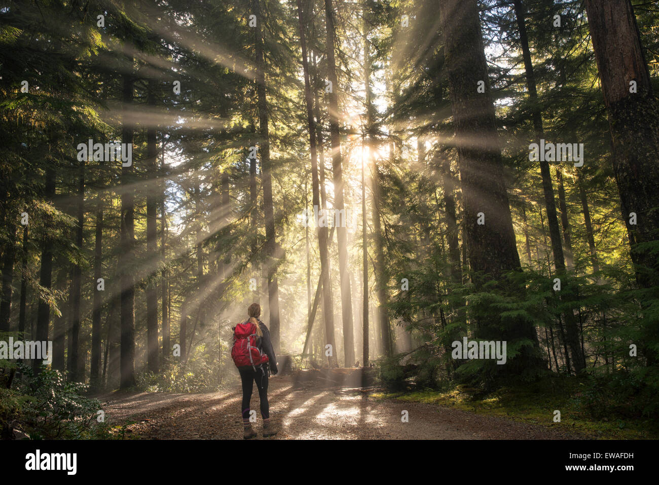 Road/trail and hiker along Opal Creek with sunburst/godrays. Opal Creek Wilderness, Oregon - Stock Image
