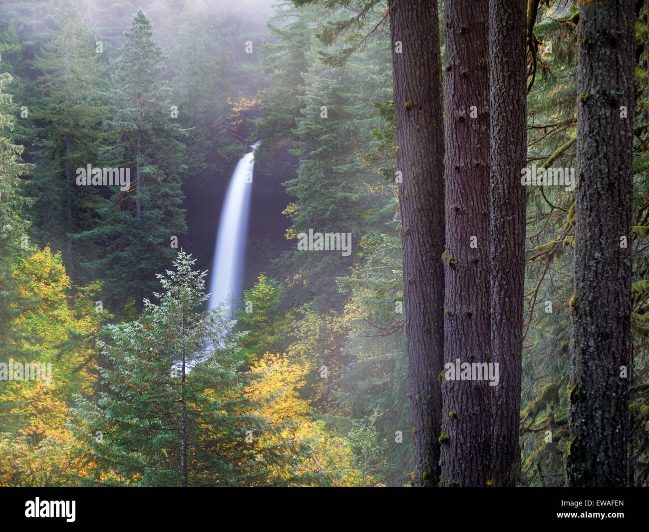 North Falls with fog and fall color. Silver Falls State Park, Oregon Stock Photo