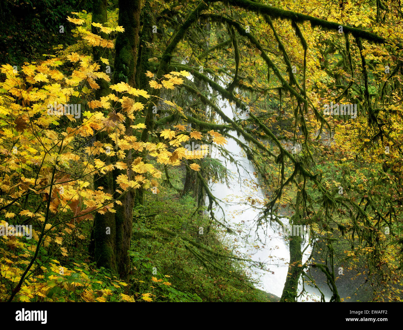 Middle North Falls and fall color.Silver Falls State Park, Oregon - Stock Image