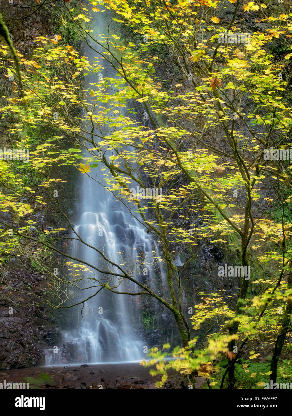 Double Falls and fall color. Silver Falls State Park, Oregon - Stock Image