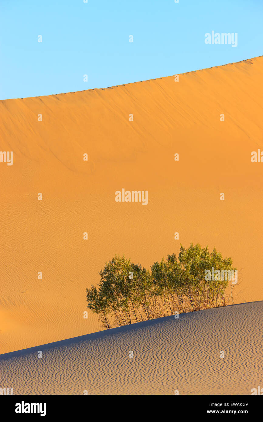 Sunrise in the Mesquite Flat Sand Dunes in Death Valley National Park in California, USA Stock Photo