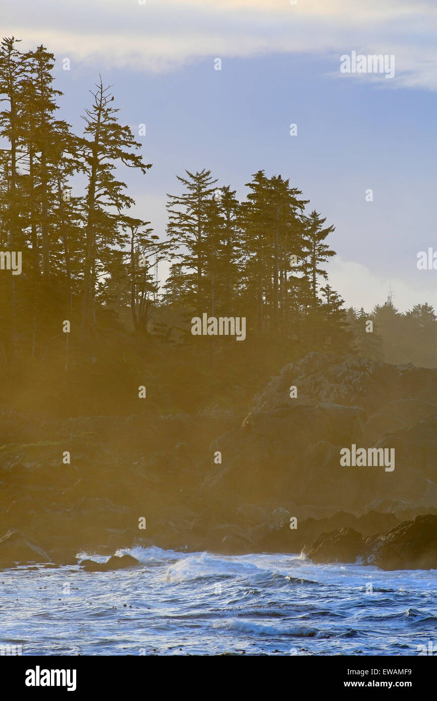 Shoreline scenic along the Wild Pacific Trail, near Ucluelet, Vancouver Island, British Columbia - Stock Image