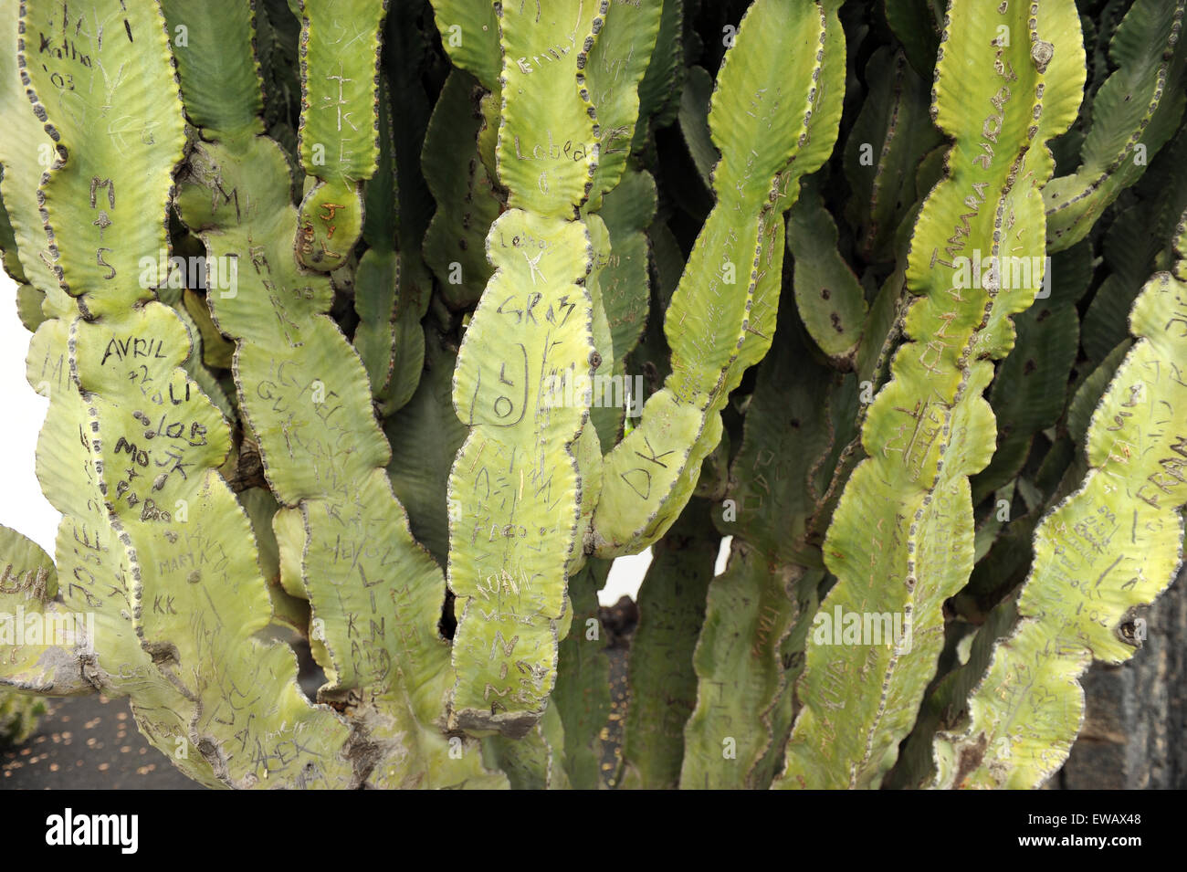 Lanzarote, Canary Islands. Writings in cactus that is situated near the entrance of a cactus park that was designed - Stock Image