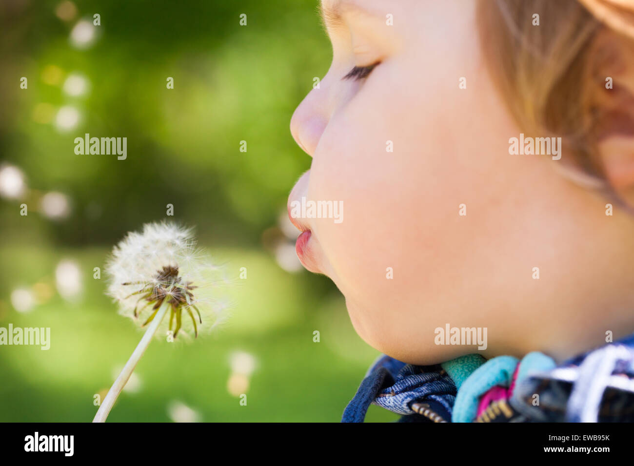 Caucasian blond baby girl blows on a dandelion flower in a park, selective focus on lips - Stock Image