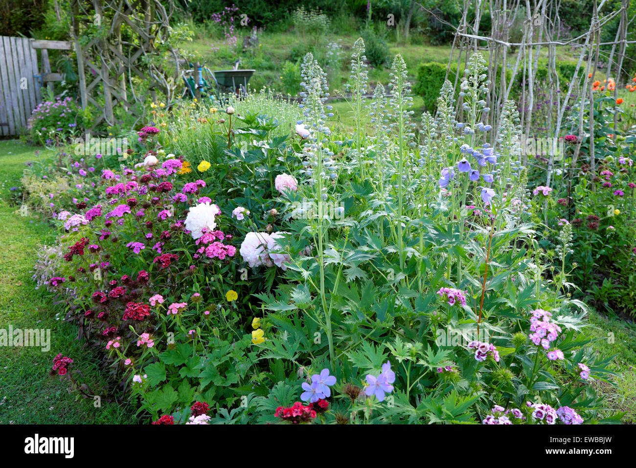 Herbaceous border with delphiniums, peonies and sweet williams in a rural flower garden in Carmarthenshire Wales - Stock Image