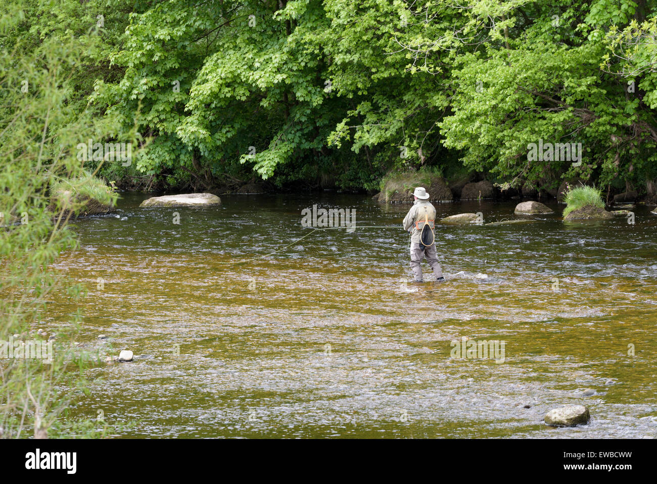 Elderly man fly fishing in the River Wharf, near Bolton Abbey, North Yorkshire, England. - Stock Image