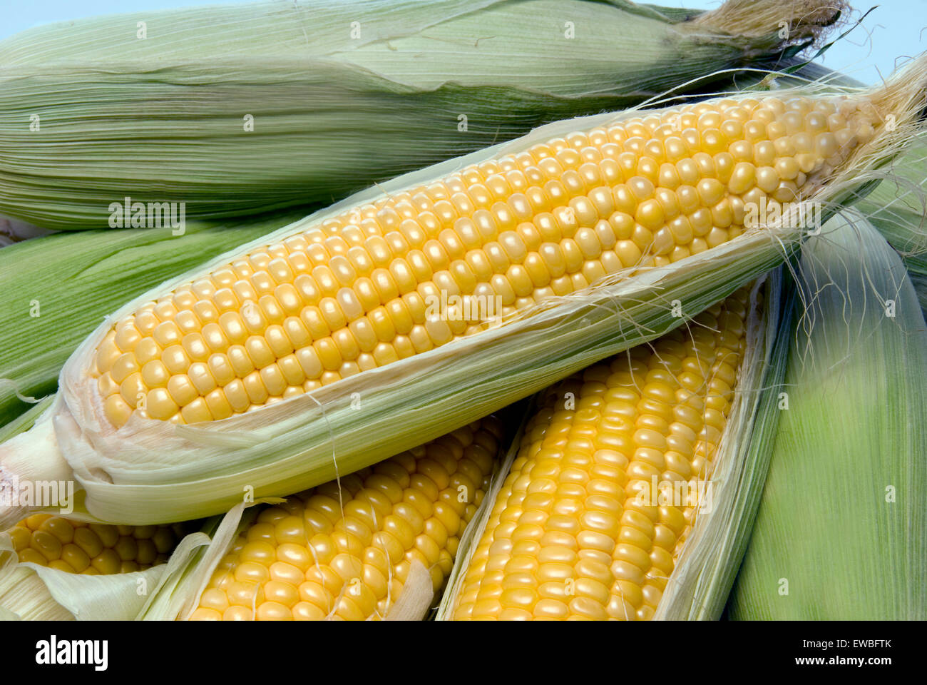 Close up of beautiful yellow summer corn on the cob fresh picked off the farm. - Stock Image