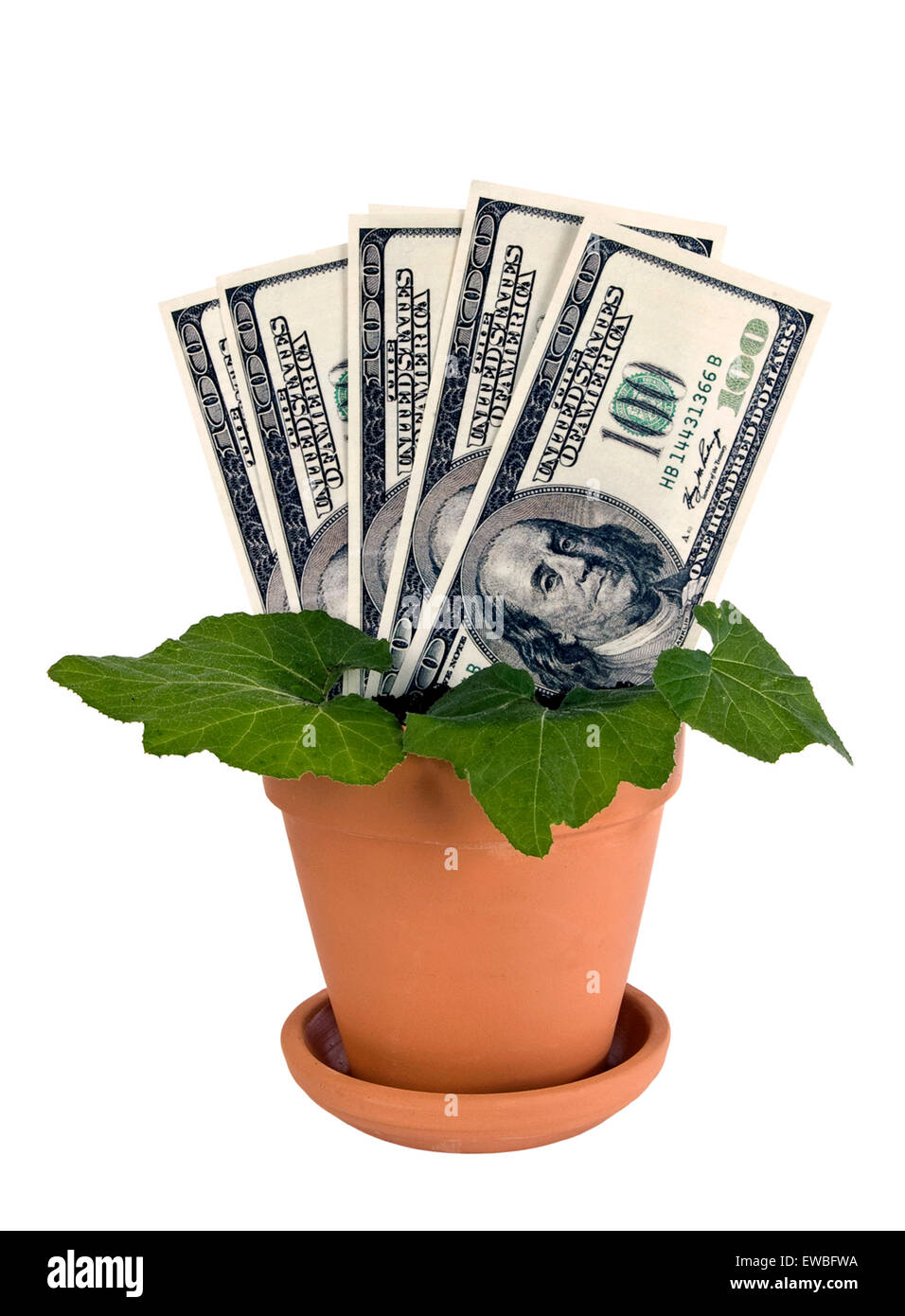 Money plant using U. S. dollars in clay pot isolated on white - Stock Image