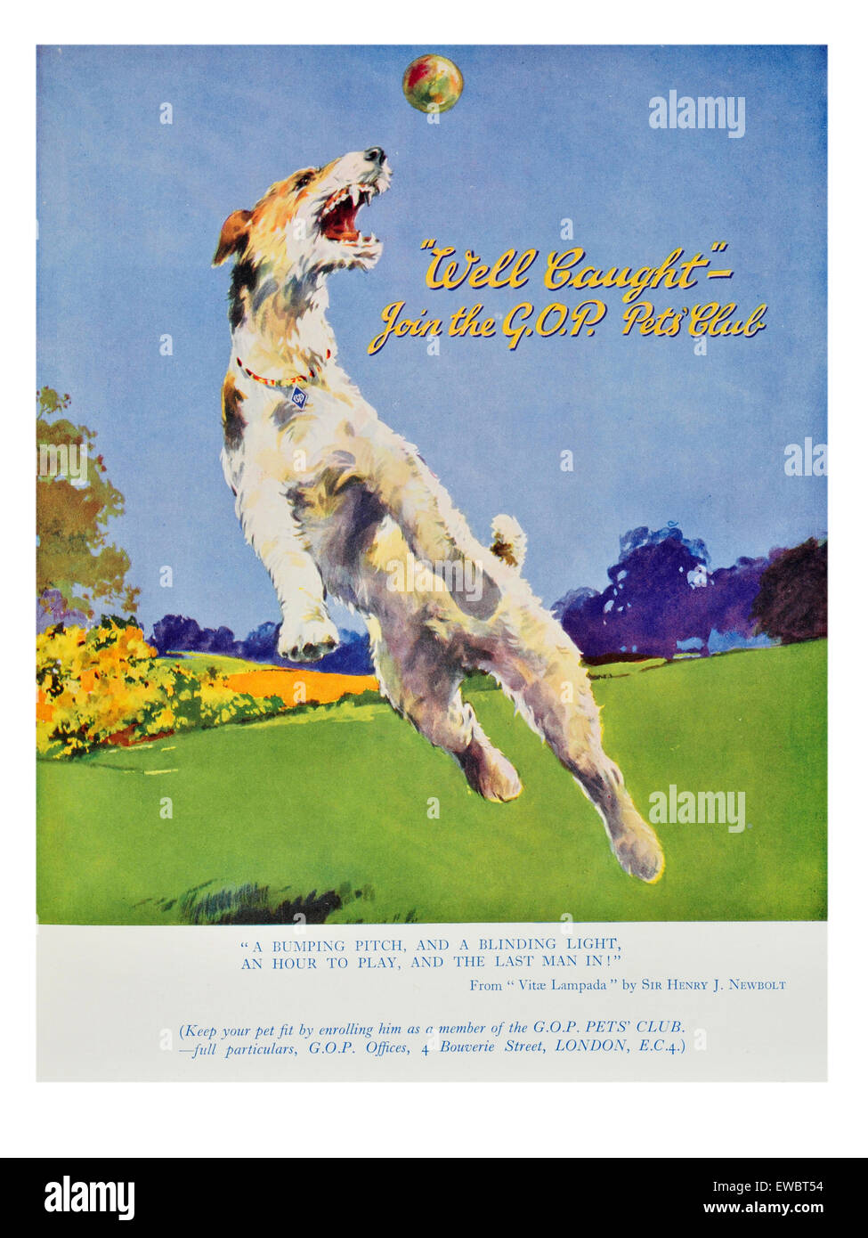 Advertisement for a pet club with a dog leaping im the air for a ball - Stock Image