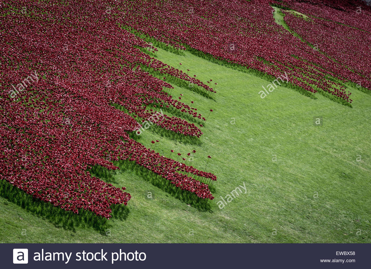 View of the Blood Swept Lands and Seas of Red poppy display, Tower of London - Stock Image
