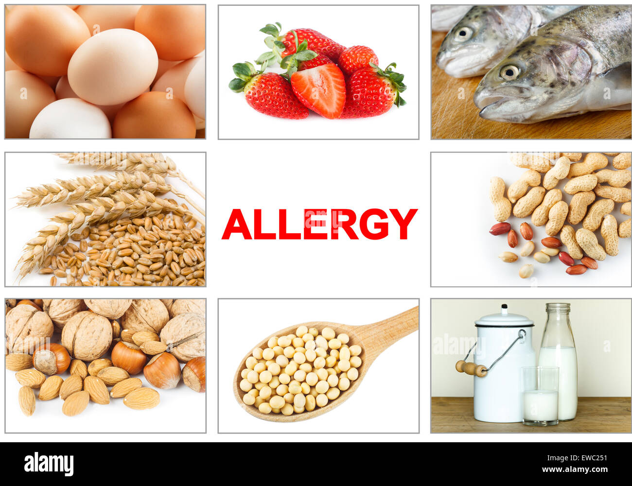 Allergy food concept. Food allergens as eggs, milk, fruit, tree nuts, peanut, soy, wheat and fish. Text 'ALLERGY' - Stock Image