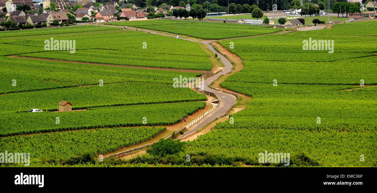 Beaune Premier Cru vineyards in Burgundy France - Stock Image