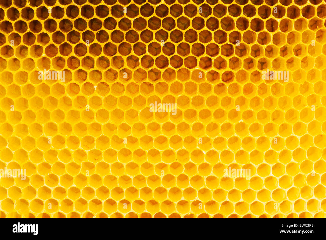 Honeycomb in beehive, closeup - Stock Image