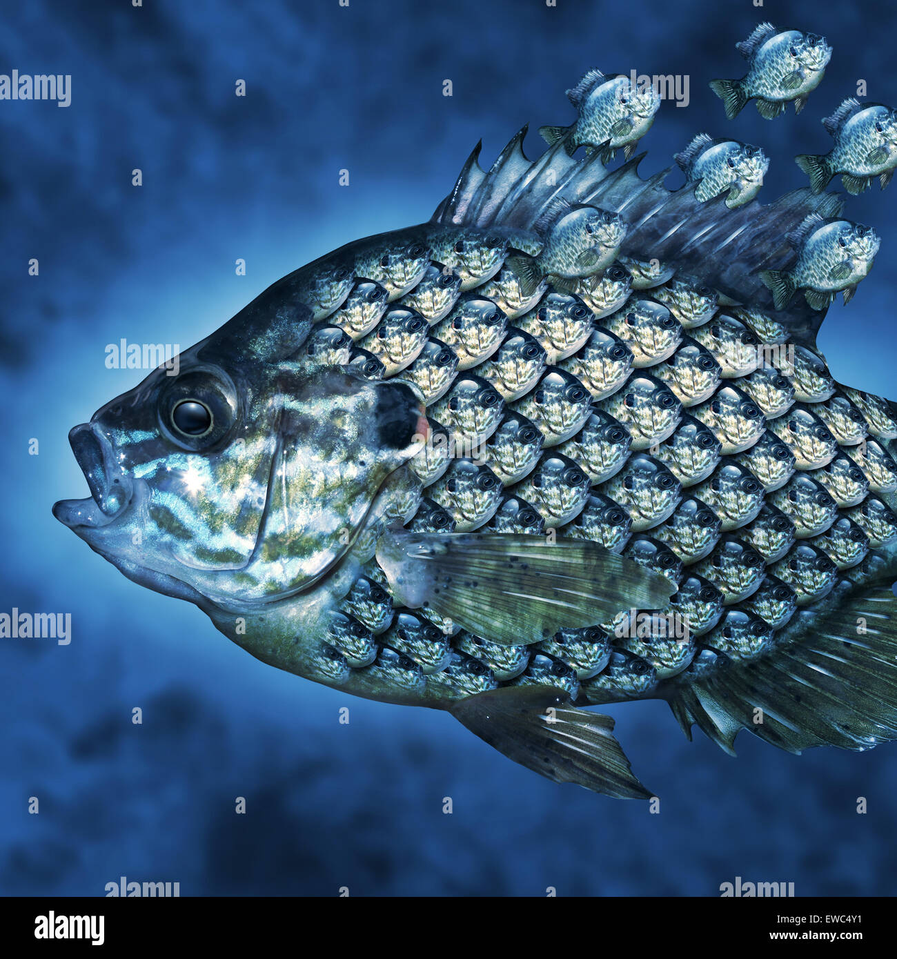 Group Leadership Management business concept as a big fish carrying a group of smaller fish as scales on the aquatic - Stock Image