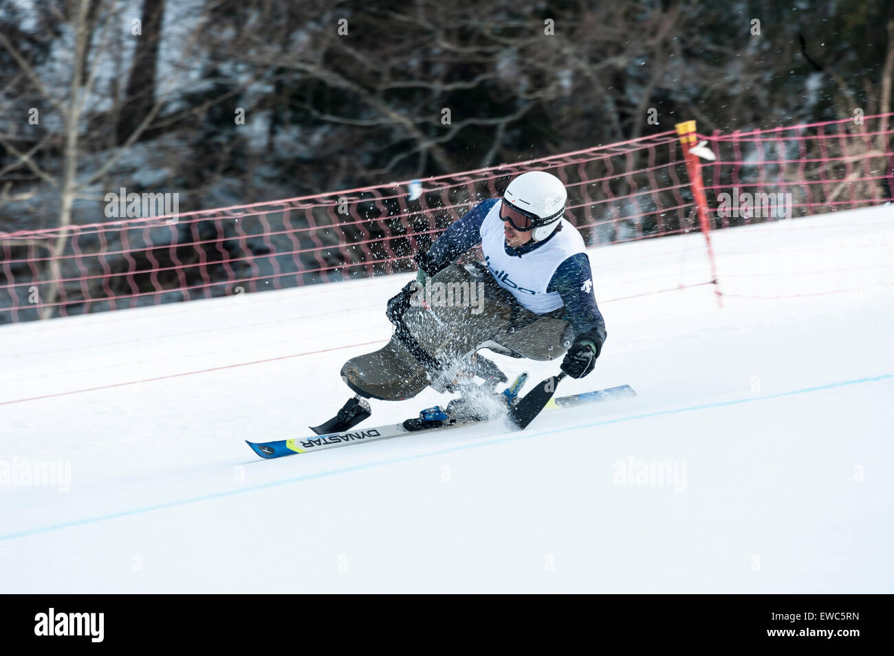 A disabled competitor using specially-adapted ski equipment, racing downhill in a giant slalom race - Stock Image