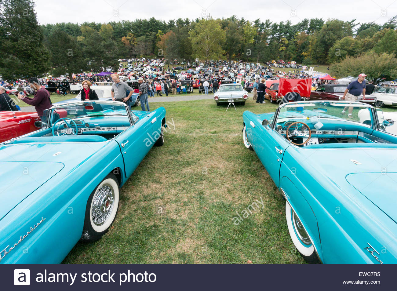 Ford Thunderbirds from the 1950\'s at the 2014 Rockville Antique ...