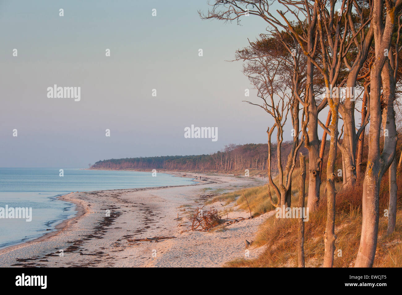 West coast of the Darss. Peninsula of Fischland-Darss-Zingst, Western Pomerania Lagoon Area National Park, Mecklenburg Stock Photo