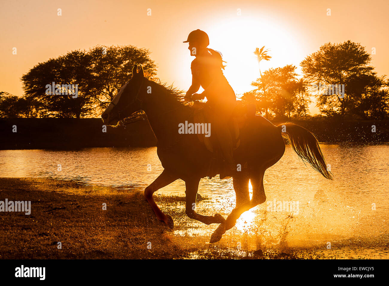 Kathiawari Horse. Woman rider galloping on a chestnut mare, silhouetted against the setting sun. Rajasthan, India Stock Photo