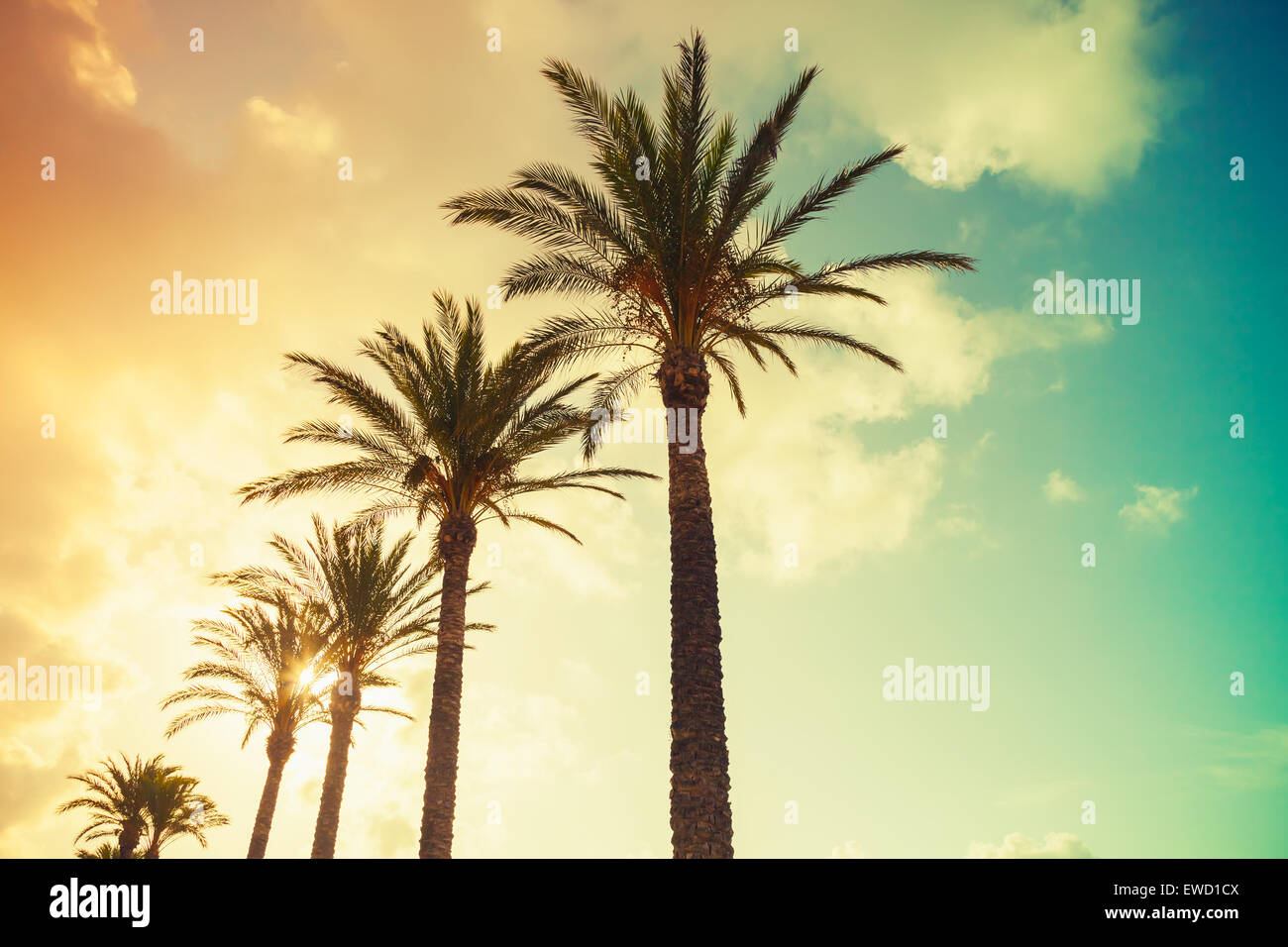 Palm trees and shining sun over cloudy sky background  Vintage style