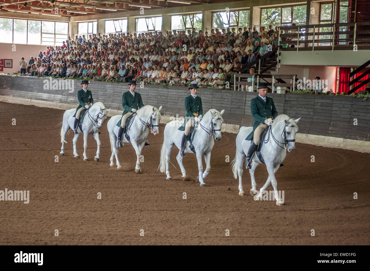 Lipizzaner performing horses at Lipica Stud Farm. Slovenia - Stock Image