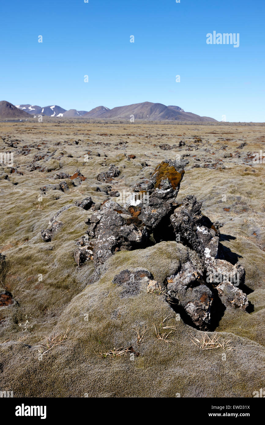 thick moss covered lava fields at hellisheidi due to the hengill volcano iceland - Stock Image