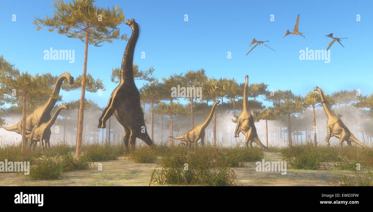 Brachiosaurus was a herbivorous sauropod dinosaur that lived in the Jurassic Age of North America. A Brachiosaurus Stock Photo