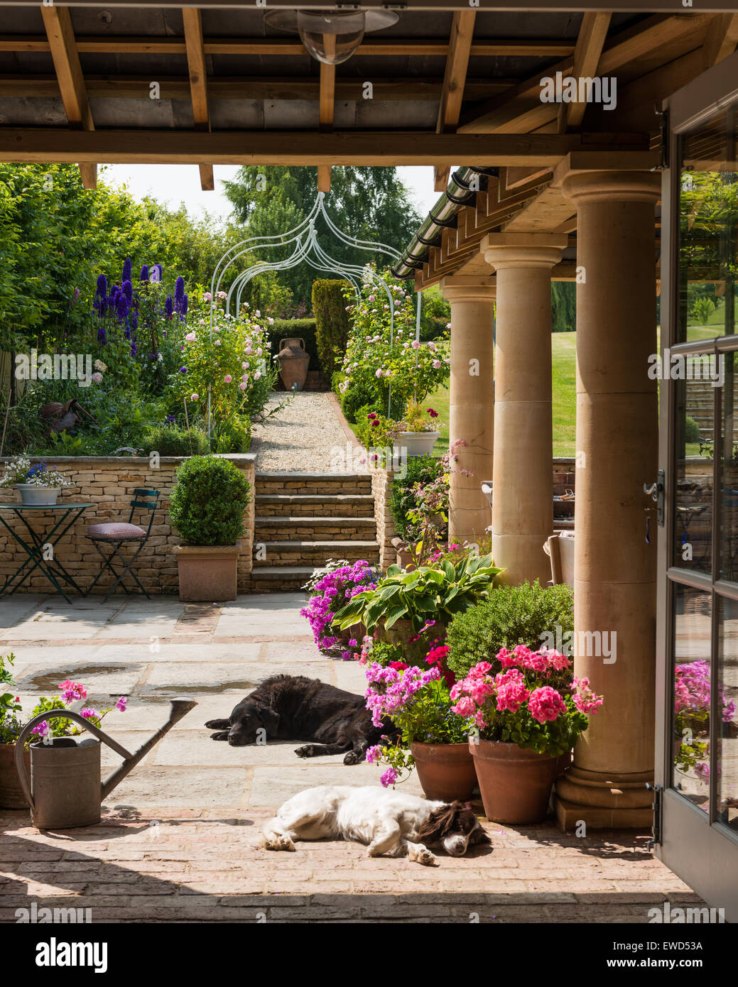View from the loggia looking up to sunny garden with sleeping dogs and potted geraniums - Stock Image