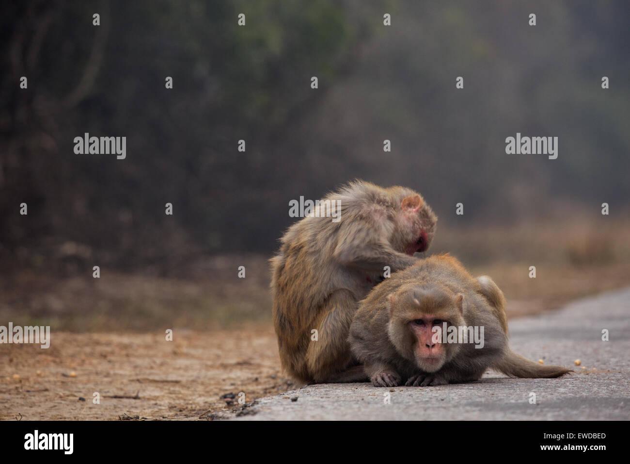 Two monkeys - Stock Image