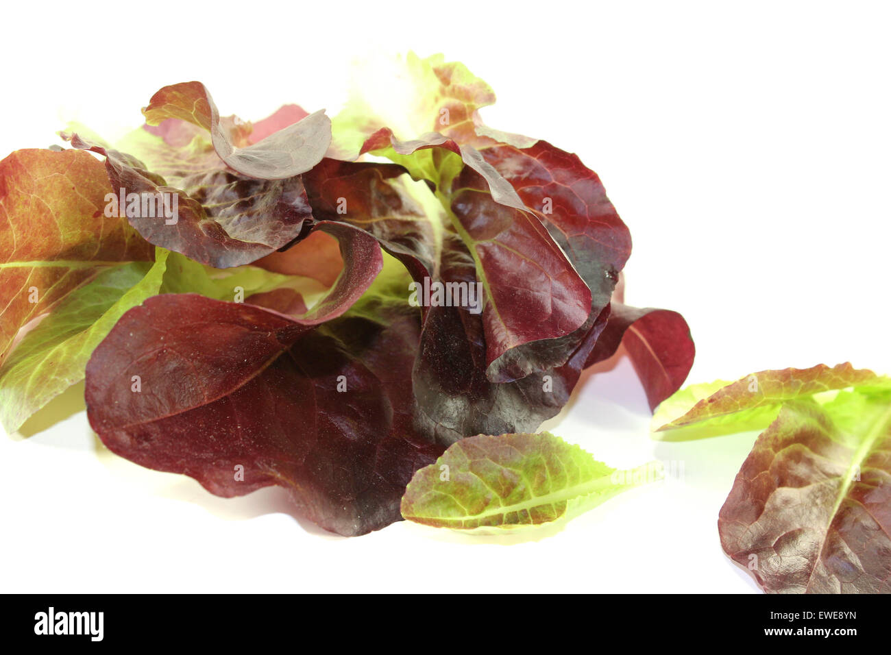 crunchy red lettuce on a bright background Stock Photo