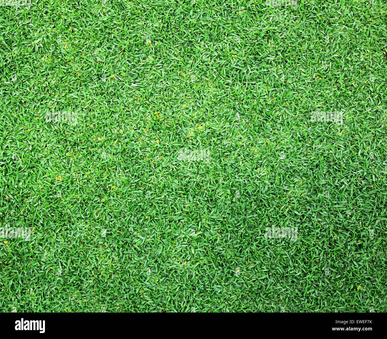 Golf green grass abstract background, nature, outdoor garden. - Stock Image