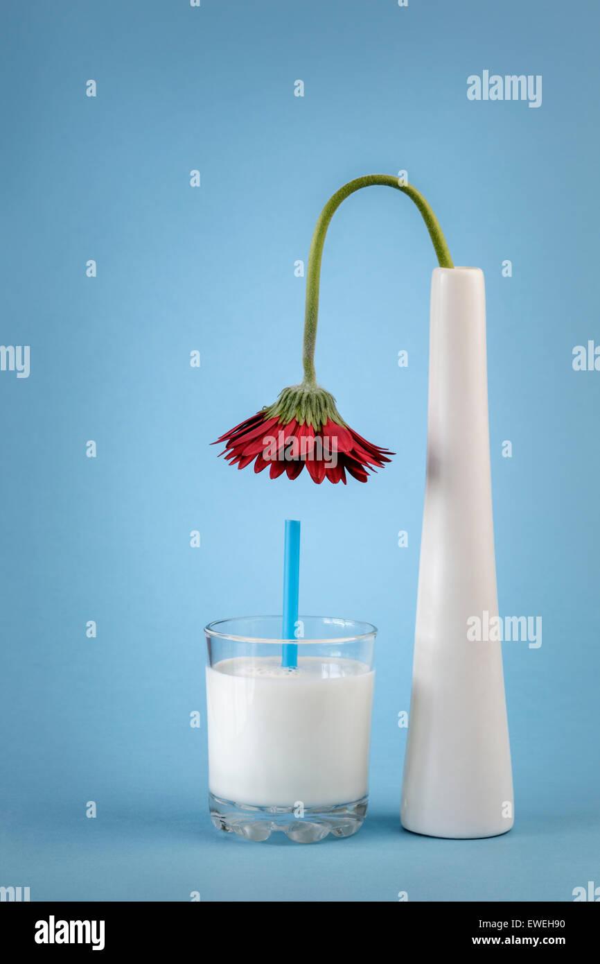 Flower in Vase bending over a glass of Milk Stock Photo