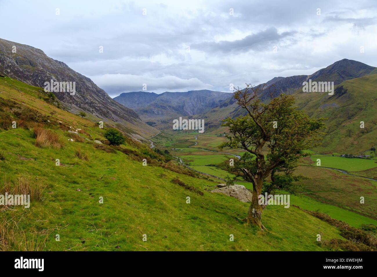 View along Nant Ffrancon - Stock Image