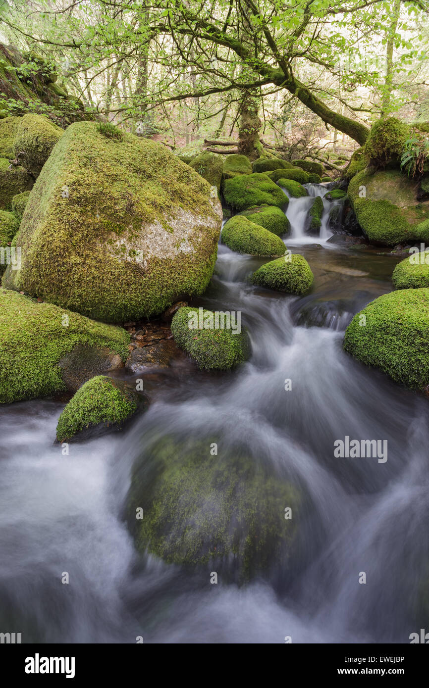Dartmoor river tumbles down the rocky river bed. - Stock Image