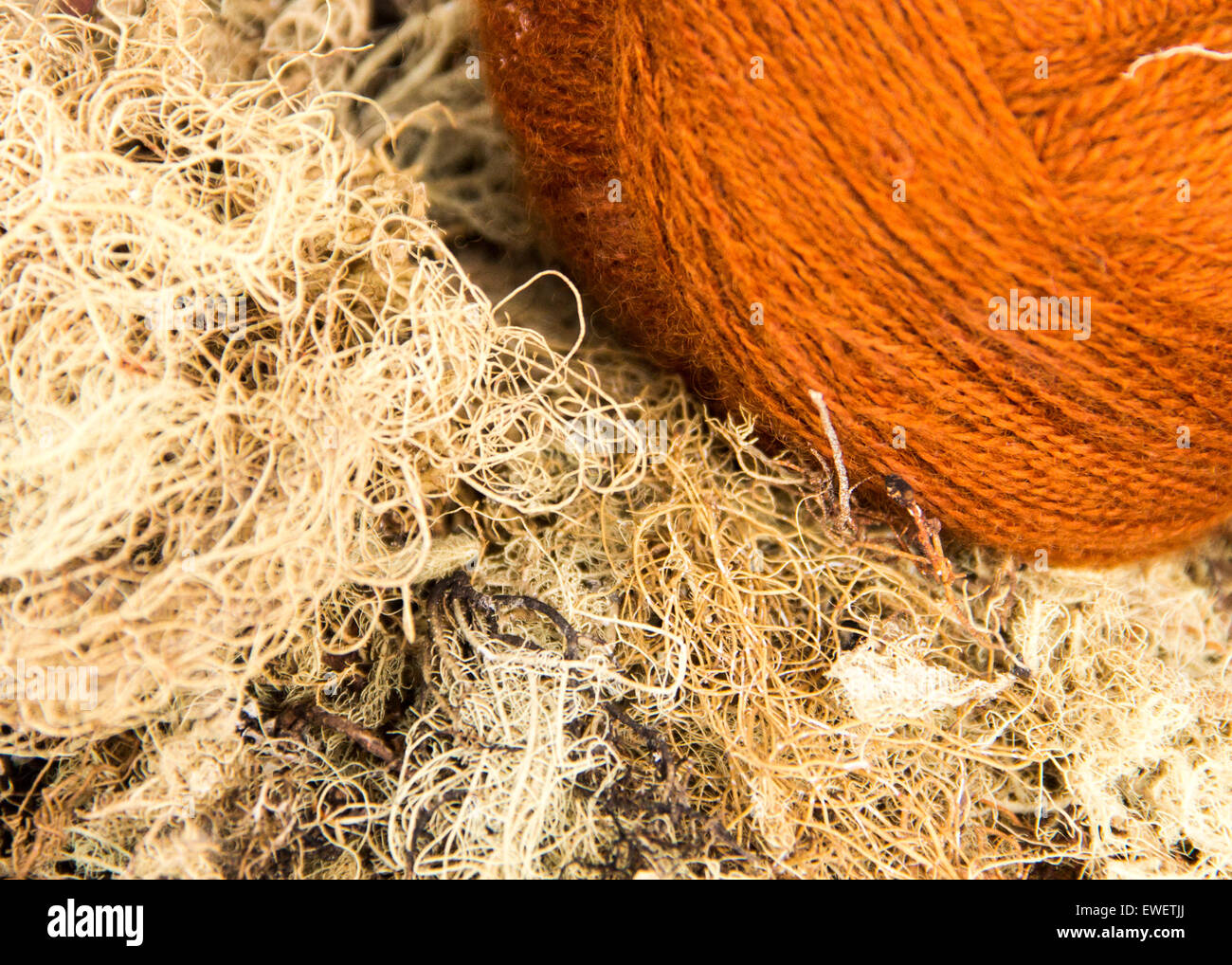 Ball of yarn with natural fibres used to dye the wool in rural Peru weaving demonstration. - Stock Image