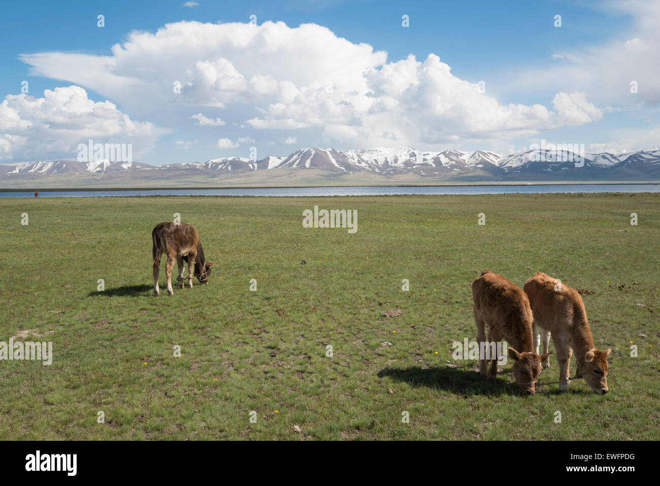 Lake Song-Köl. Kyrgyzstan. Central asia. - Stock Image
