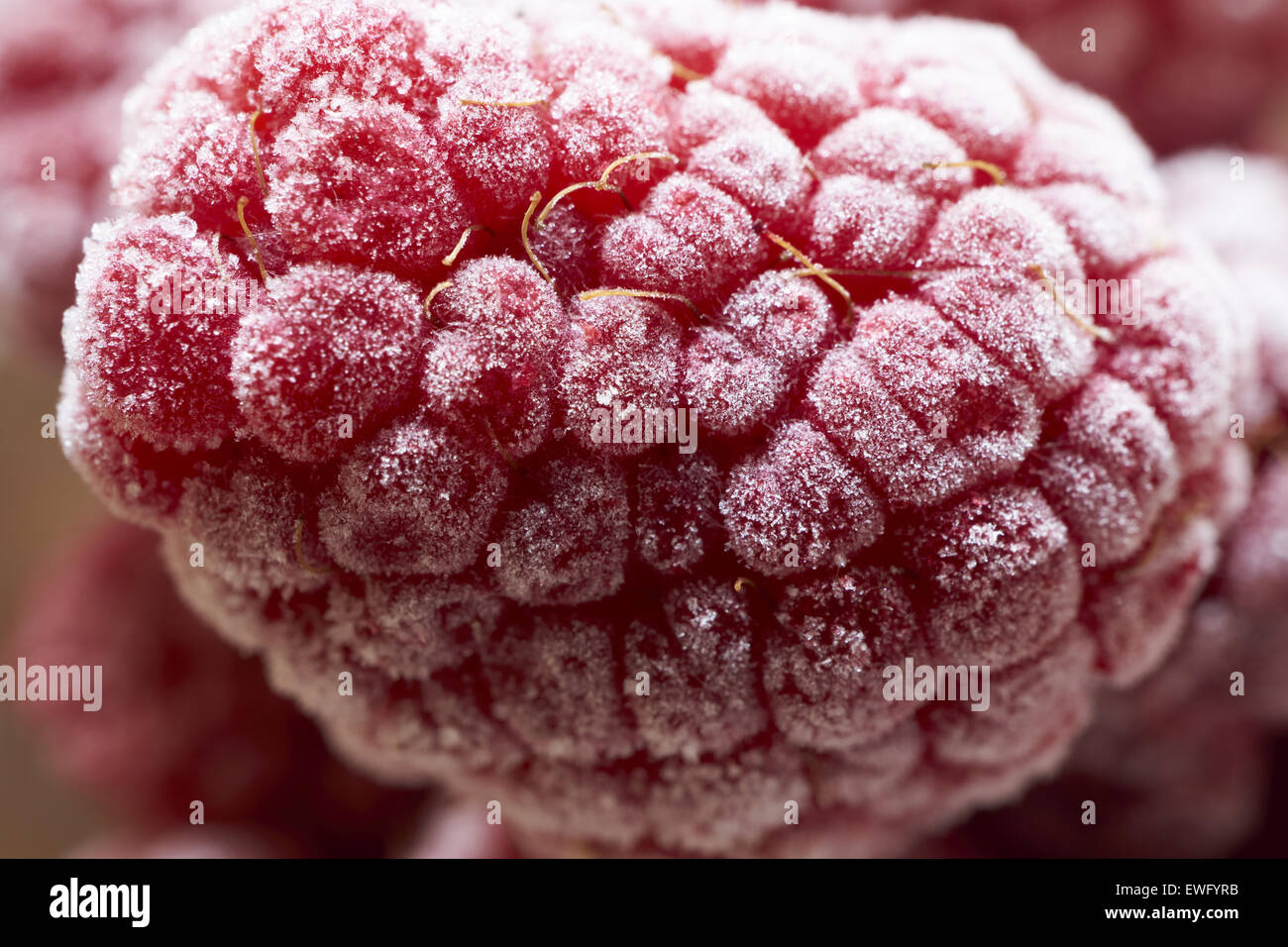 Extreme macro shot of a frozen raspberry covered with ice crystals - Stock Image