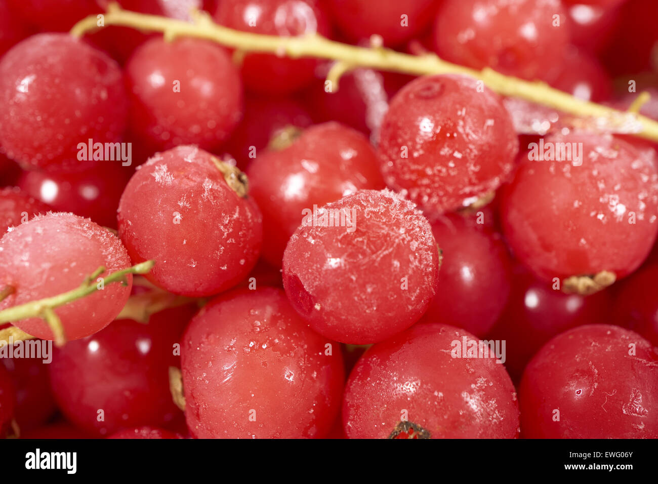 Background from many frozen currants covered with ice crystals - Stock Image