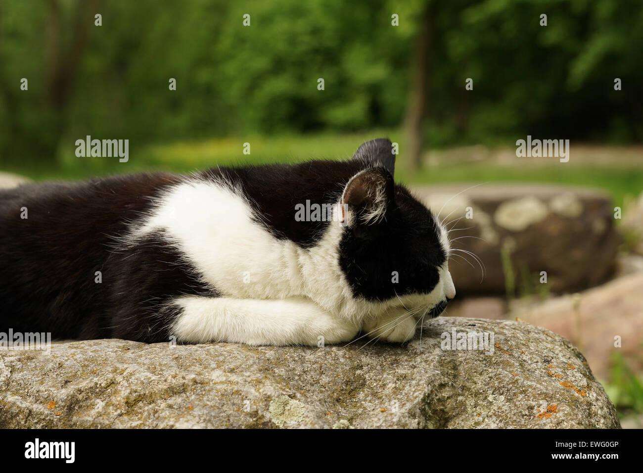 Cat sleeping on a rock - Stock Image