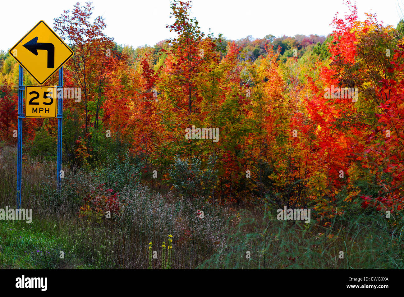 25 Autumn Curve Road Sign Speed Limit landscape outdoor plant sign trees  yellow - Stock Image