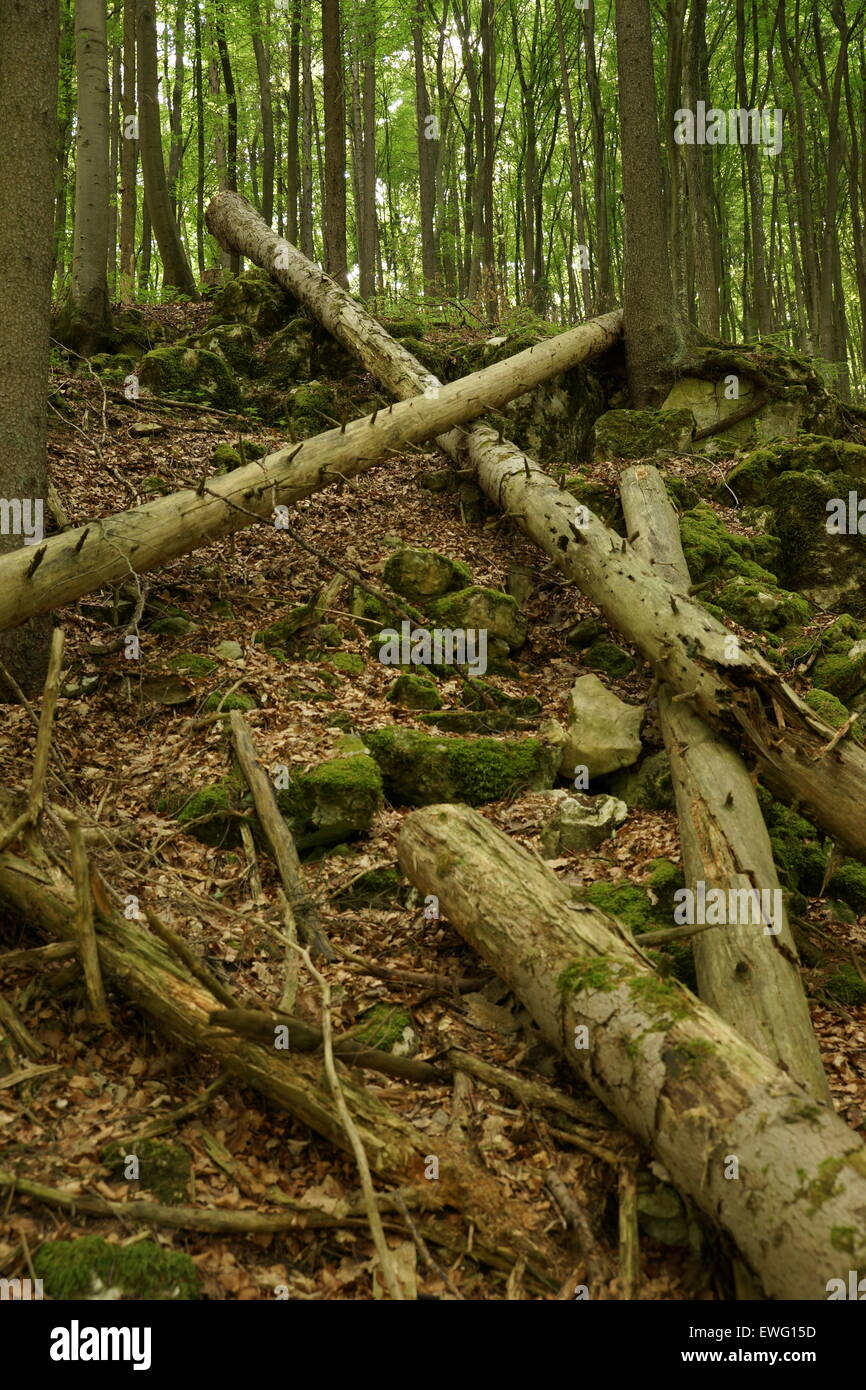 Fallen trunks in the forest - Stock Image