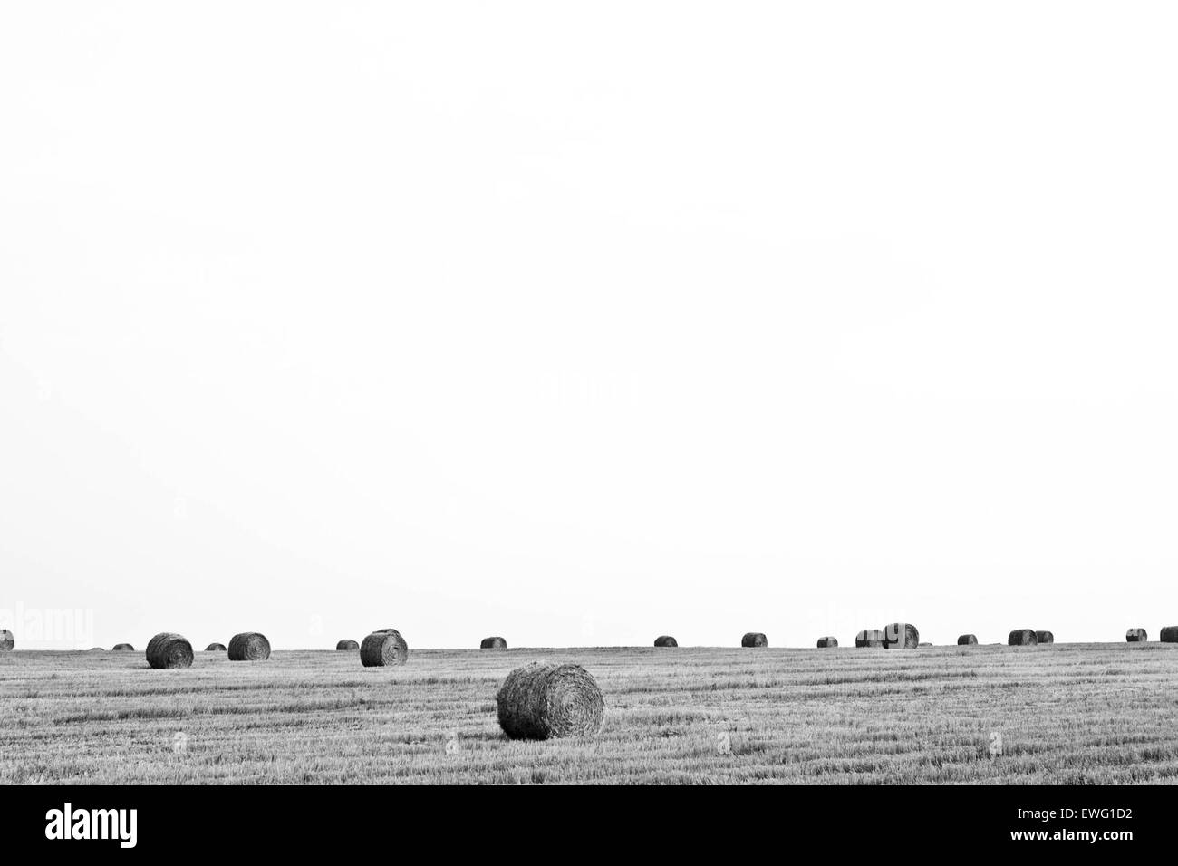 Open Landscape with Hay Bales Bale Minimalist White Background background black And White grass hay landscape outdoor - Stock Image