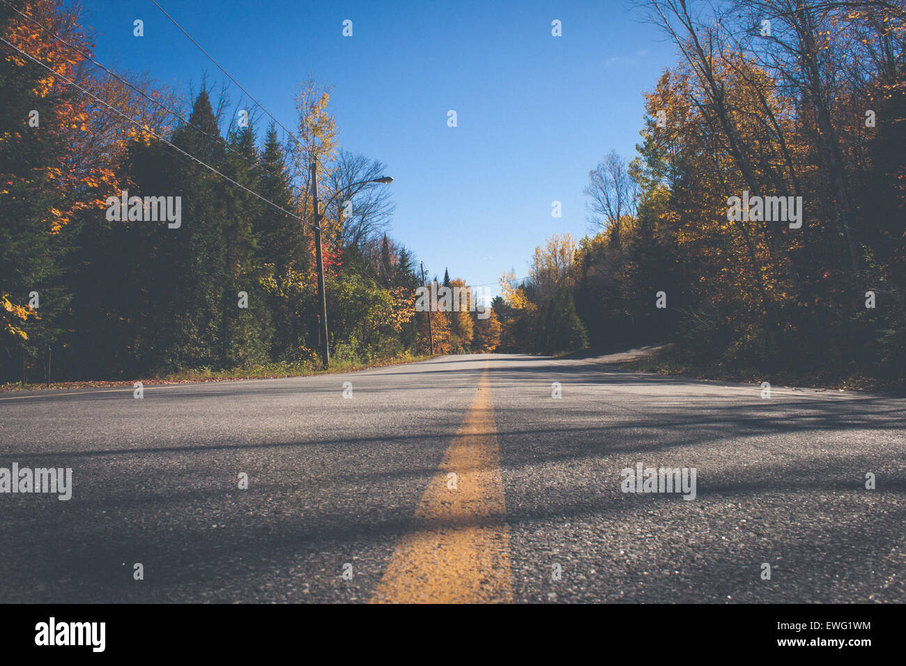 Road with Yellow Line Surrounded by Trees Street outdoor road trees  yellow line autumn - Stock Image