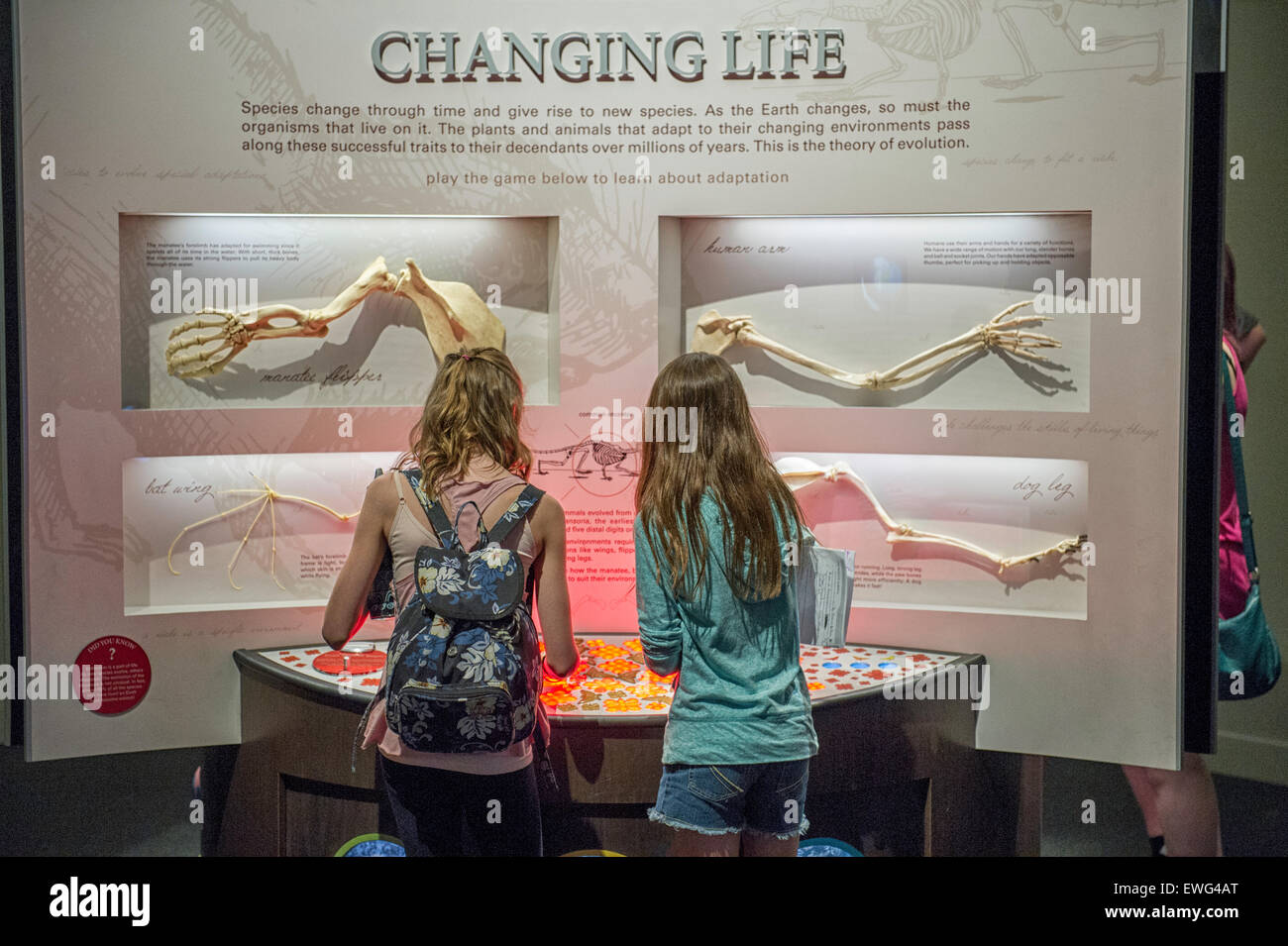 Young students at an exhibit in the Royal Tyrrell Museum of Paleontology. Located in Drumheller, Alberta Canada - Stock Image